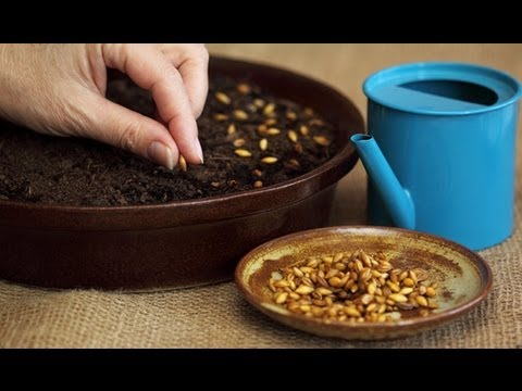 How to Plant Flower Seeds