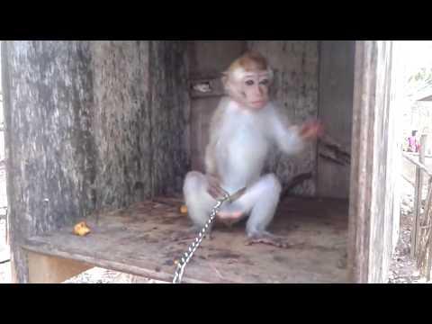 Monyet Kaget GOKILL ABIS LUUCCUUUUU