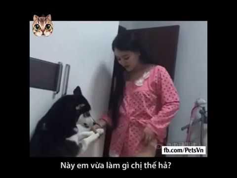 Dog troll girl - YouTube