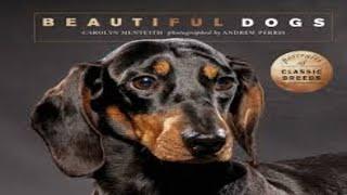 Dog Mating | Mating | dog | dog show | animal | Beautifull dog | Beauifull  breed
