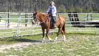 Sweet Pea 1 - Quarter Horse Mare