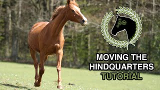 How to move your horse hindquarters without force | Tutorial | Clicker training