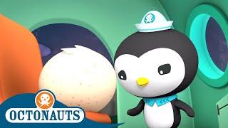 Octonauts - A Strange Egg Under the Sea   Cartoons for Kids   Underwater Sea Education
