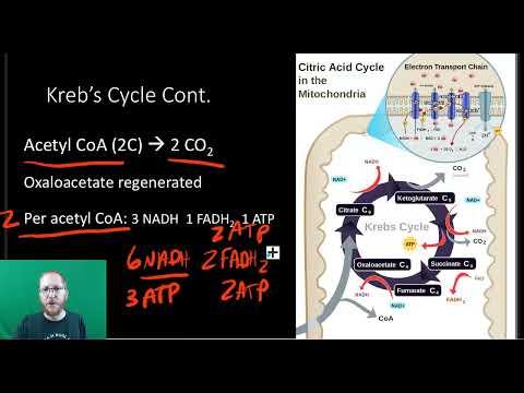 AP Bio Chapter 9-2
