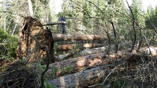 4/5 Storm Damage at Shell Creek Campground 7/8/19 (Bighorn National Forest)