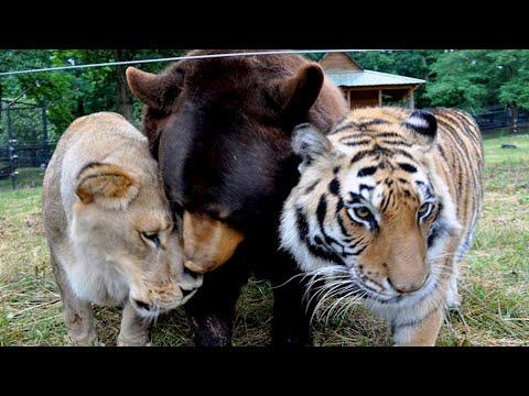most-unbelievable-friendships-between-different-animal-species!
