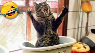 Funny Cats And Dogs Videos That Will Make You So Much Laugh 😹😂
