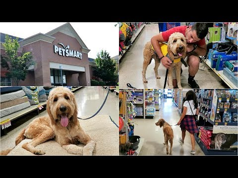 SHOP WITH ME AT PETSMART! WITH MY GOLDENDOODLE PUPPY DUDE!
