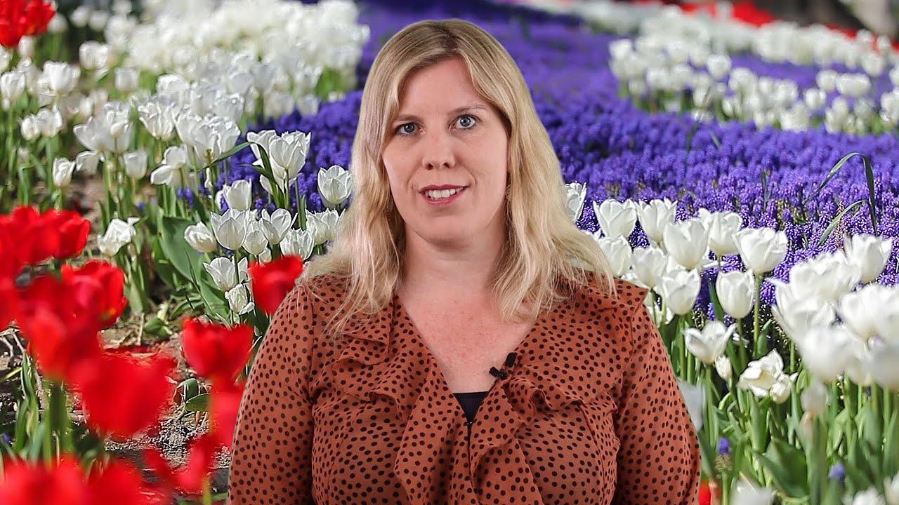 Still uit de video 'Jessica weet raad: wilsbekwaam, wat is dat en wat doet de notaris?'