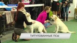 В Запорожье прошла Сертификатная выставка собак всех пород «Кубок Запорожья-2016»