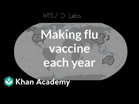 Making flu vaccine each year   Infectious diseases   Health & Medicine   Khan Academy