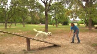 НА «Клуб собачей площадки» - вызов ветеринара на дом, питание и уход за собакой одним кликом(, 2015-06-10T09:29:11.000Z)