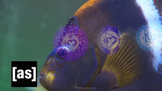 Going Deep: A FishCenter Special Report | FishCenter | Adult Swim