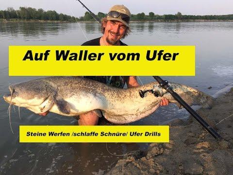 Waller-Workshop Teil 14 /Waller vom Ufer/ Steine Werfen / schlaffe Schnüre /by Stefan Seuß
