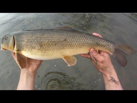 Bait Fishing #72 - River Fishing For White Sucker And Carp With Nightcrawlers