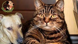 Самовыгул собак, 5 опасностей. Почему не стоит отпускать собаку гулять без присмотра