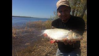 #10 Рыбалка с Берега на Реке Волге. Ловля Красноперого Голавля на Донку Фидер