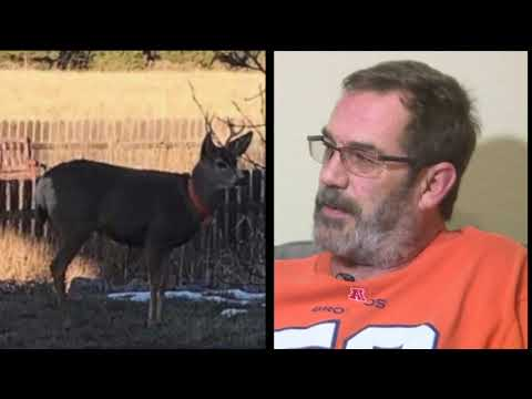 BEARDO - Franktown man gored by domesticated Deer