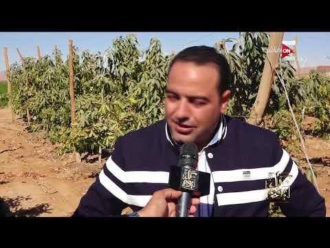 كل يوم - أهالي قرية بلانة بأسوان يستغيثون من اختلاط مياه الشرب والري بالصرف  - 00:20-2018 / 2 / 18