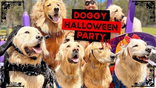 Doggy HALLOWEEN pawty, monster cake, pizza and of course … SWIMMING!!