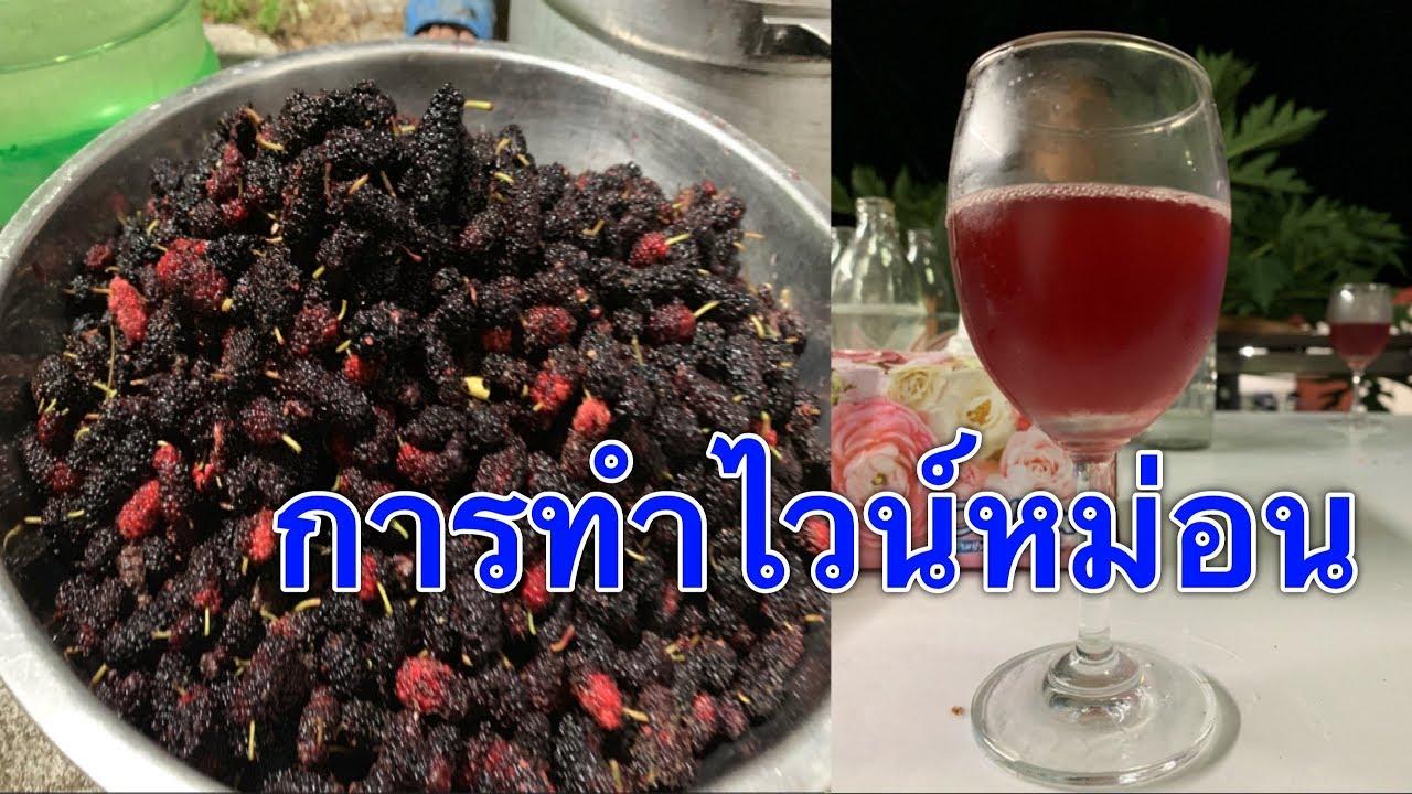 Mulberry wine 🍷 การทำไวน์หม่อน