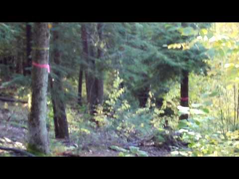 Autumn Justice 2 - video 1