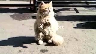 Улетное видео!!! Бездомный Кот просит кушать HD
