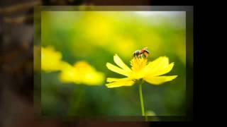 Pest Control Sewickley Pennsylvania (412) 228-5791
