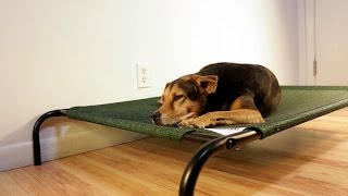 Coolaroo Pet Bed Review