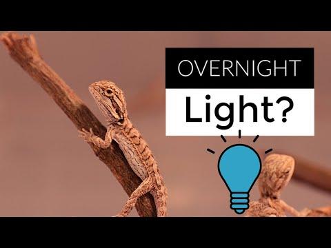 Do Bearded Dragons Need Night-Time Lights?