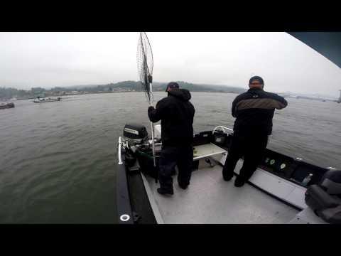 GoPro Fall Chinook Wobbler fishery Mouth of Cowlitz in Longview Washington