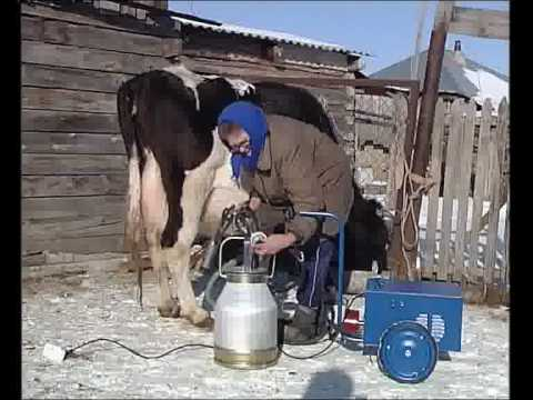 Станок для дойки коровы
