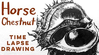 Ink speed-drawing a Conker with a brushpen (Horse Chestnut)