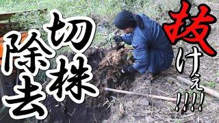 山開拓・土地整地・田舎暮らし#125|蹴りで切り株を除去|少しづつ竹を切り削る