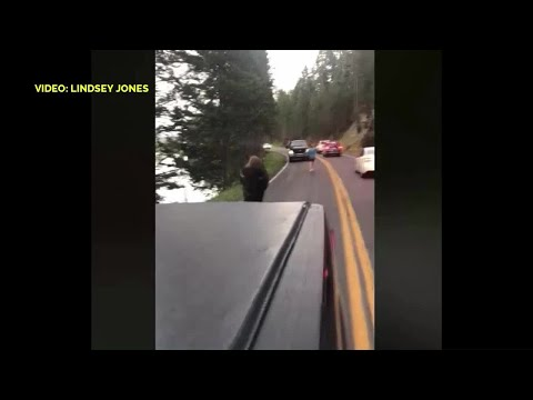 Video extra: Man taunts bison in Yellowstone Park