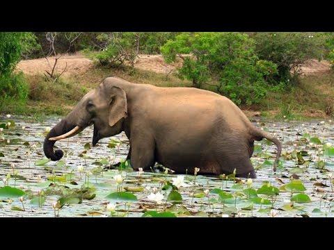 Wild Animals In Yala National Park, Sri Lanka - AnimalzTV