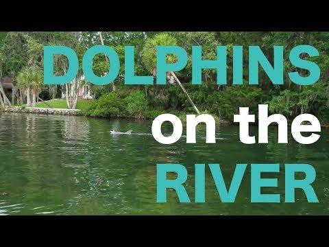 Shrimp and Dolphins / Homosassa River ~ SOJOURN SOLEIL