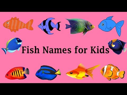 Learning animals amazing freshwater fish names and videos for Creative fish names