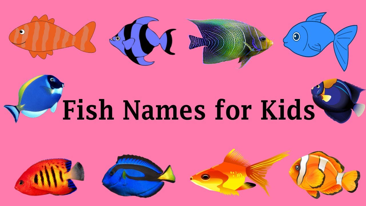 Unique fish names for kids a to z bd kids youtube for Creative fish names