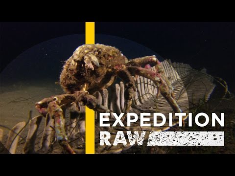 Watch: Decomposing Dolphin Brings New Life to Seafloor | Expedition Raw