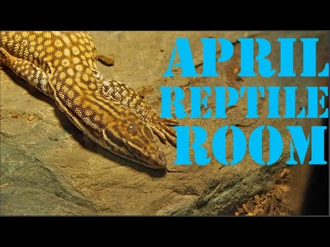 Reptile Room Tour April 2017!
