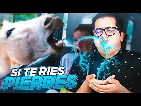 INTENTA VER ESTE VIDEO SIN REÍRTE 1000% ¡IMPOSIBLE!
