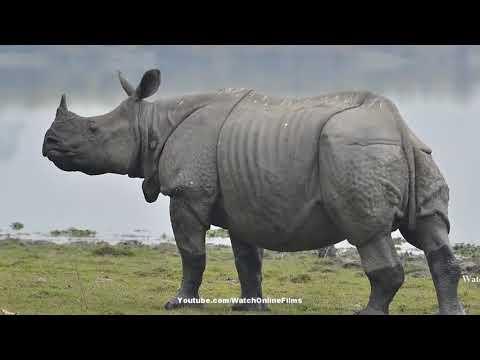 ये है जंगल का सबसे खतरनाक जानवर   शेर और हाथी भी डरते है इससे