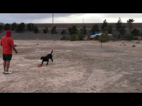 Finn plays frisbee.