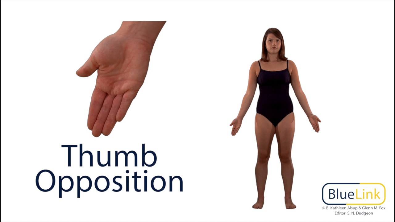 Thumb Opposition Reposition - YouTube