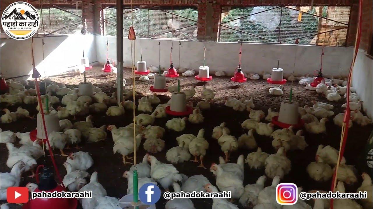Murgi Palan || Polutry Farm || Pahado Ka Raahi