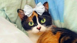 Download Куки - Мальчик или Девочка? | Сливки шоу правда или ложь Mp3 and Videos