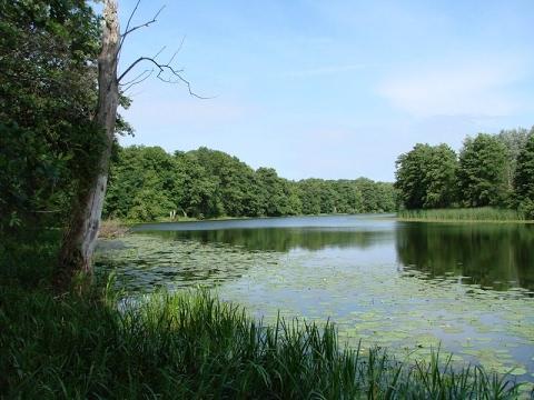 Дача 7 сот на реке хавка (20м до реки)-чудное место для отдыха +9 сот огород в 5км от рыкани снт волна. Дом кирпичный 36 кв. М. Плюс хоз. Постройки.