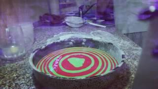 Как сделать бисквитный торт (цветной). How to make a biscuit cake