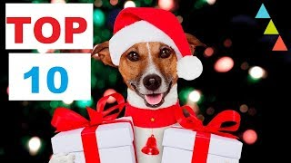 Top 10 Best DOG CHRISTMAS Gift 🎁 ideas 2018✅ (Your dog will thank you)